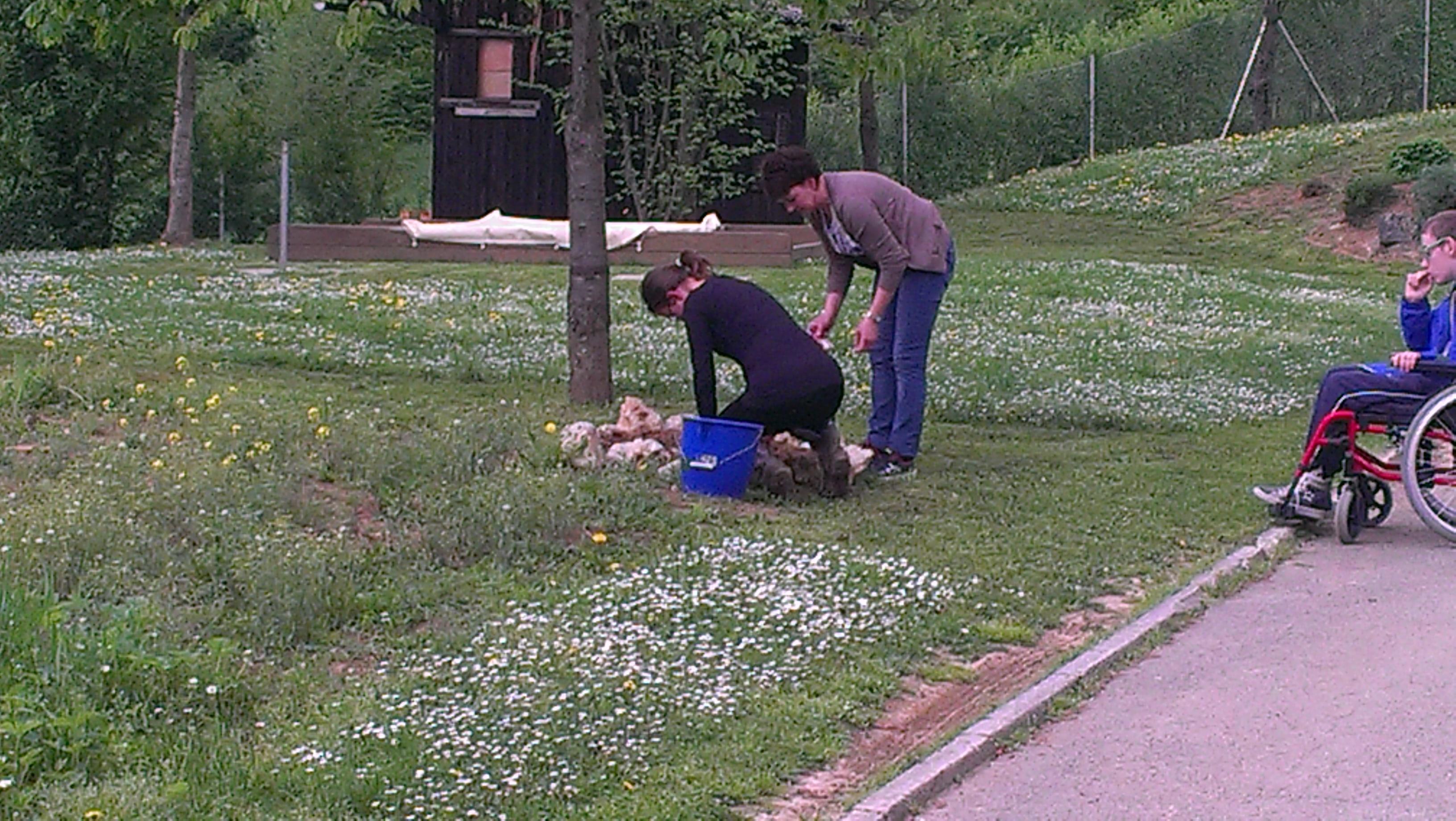 Urejanje okolice vrta